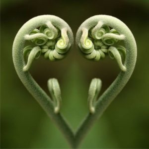 sprouting-hearts